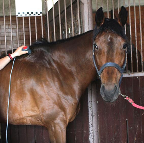 equine rehabilitation