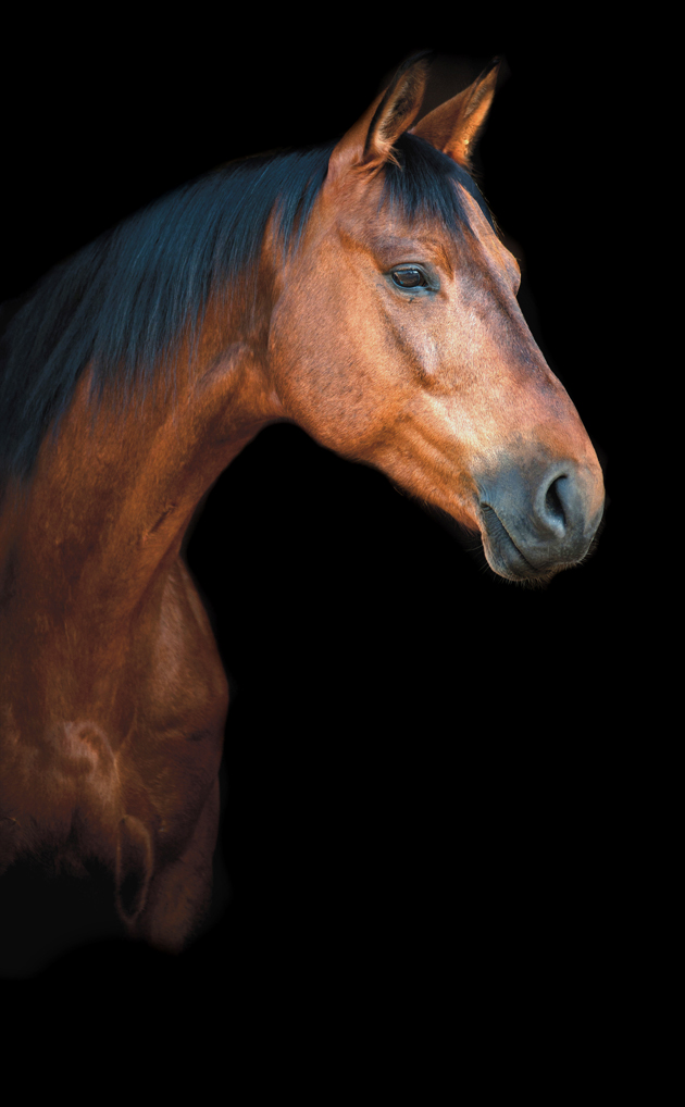 ultrasound therapy for horses
